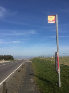 A bus stop sign and empty road. The sky is very blue, and there is a sheep grazing inside a fence around a green pasture.